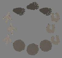 謎解き練習問題『アニマルウォーキング』の解説用画像その1